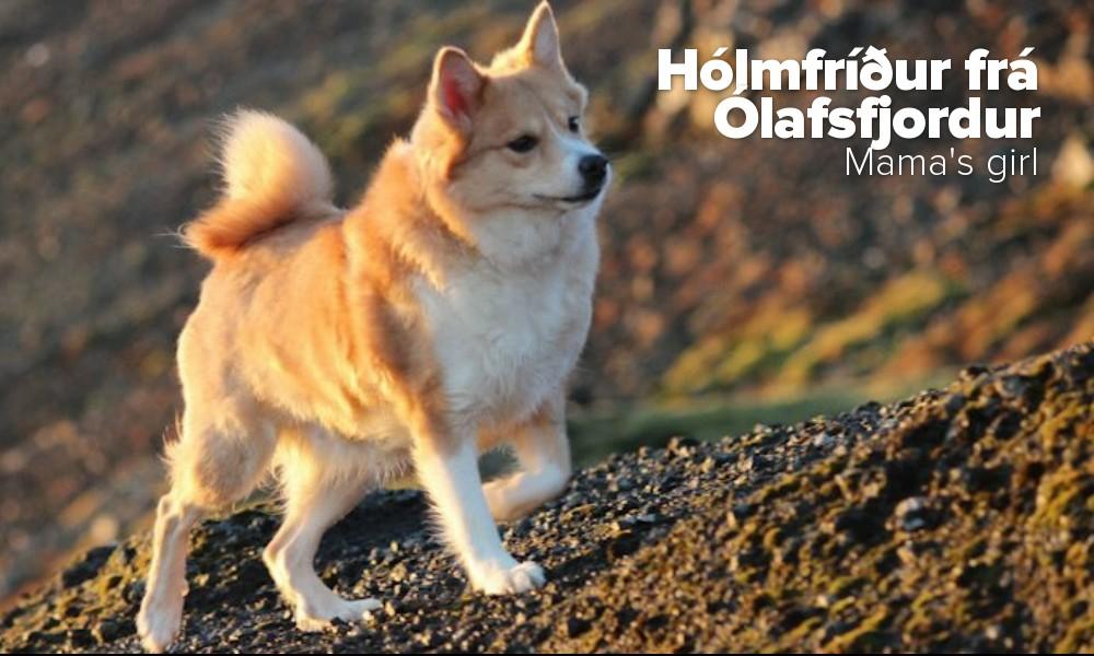 Hólmfríður frá Ólafsfjordur